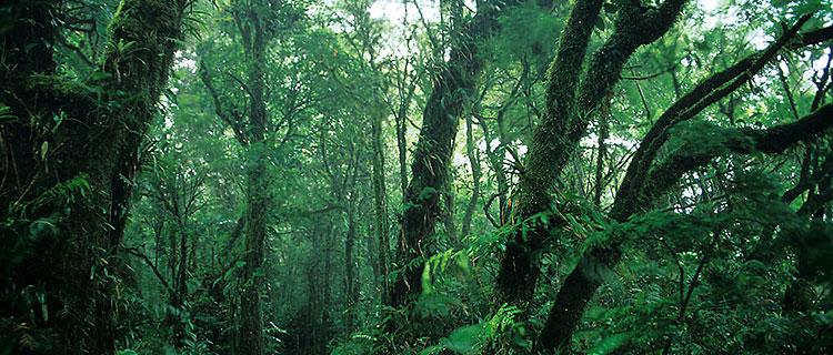 biodiversity rainforest - photo #44
