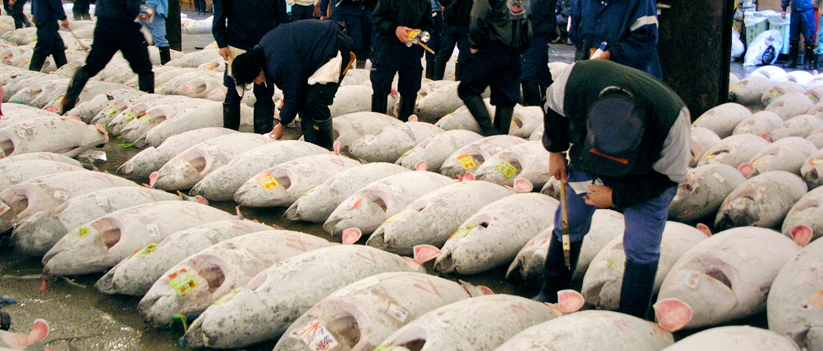 Global leaders in seafood step up their actions for ocean