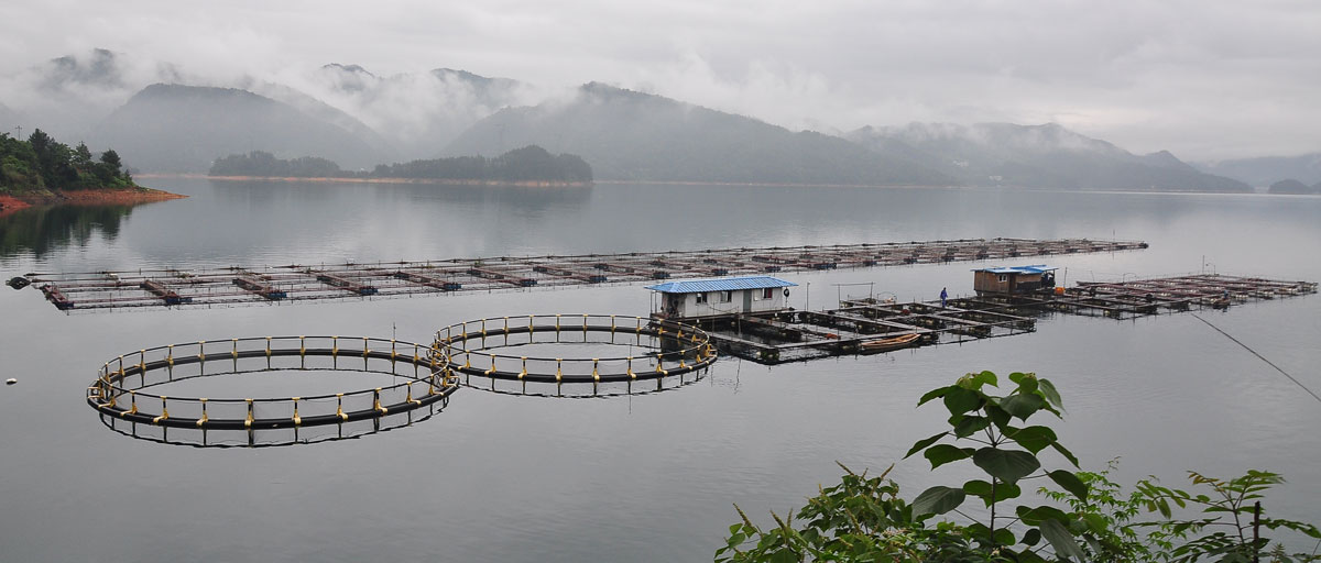 aquaculture industry in china 2014 2017 Fao and globefish will participate in the annual global aquaculture summit organized by the china aquatic products processing and marketing alliance (cappma) and the us soybean export council (ussec) to discuss the challenges and opportunities for sustainable aquaculture production and consumption.